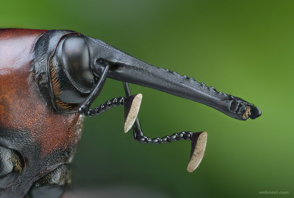 macro photography by javierruperez