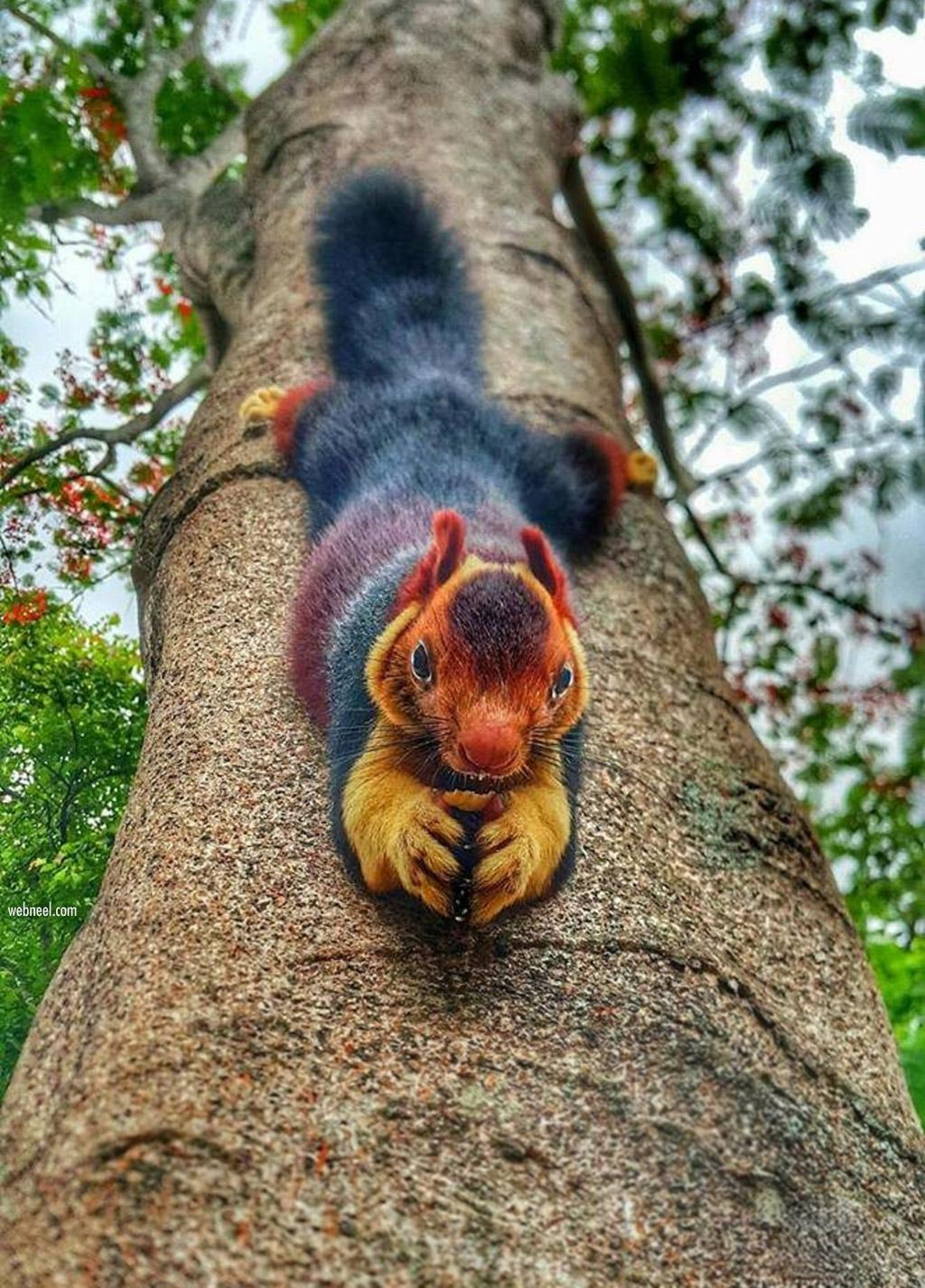 wildlife photography squirrel