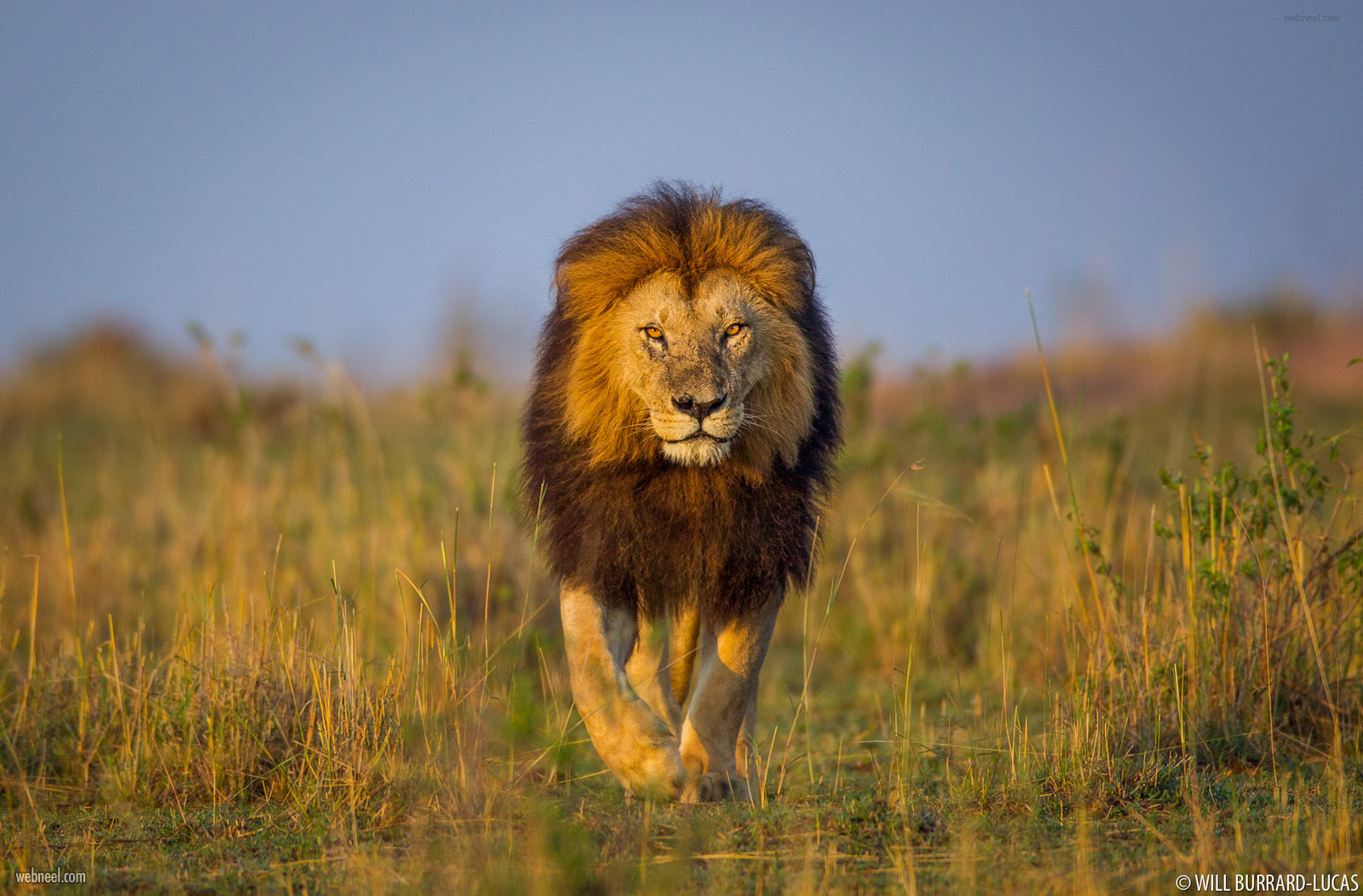 wildlife photography by united kingdom photographer by will burrard lucas