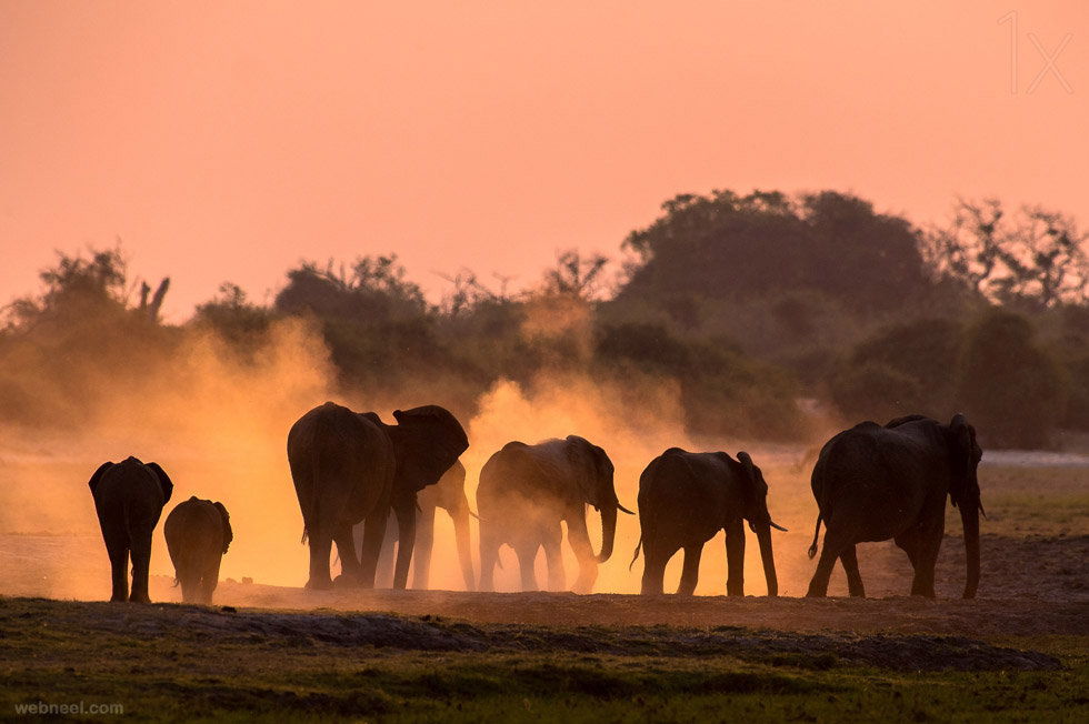 elephant wildlife photo