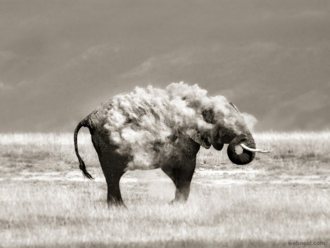 elephant wildlife photography