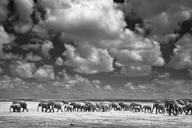 elephant wildlife photography by billydodson