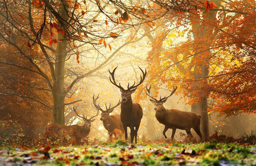 deer wildlife photos