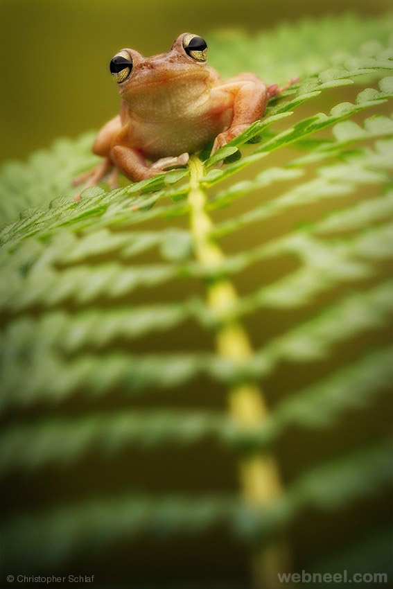 frog wildlife photography by christopher