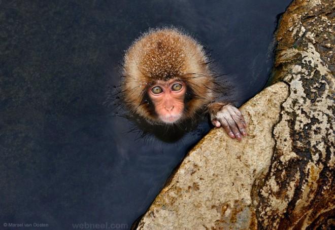 wildlife photography by marselvanoosten