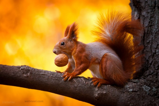 squirrel wildlife photography