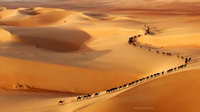 camel wildlife photography