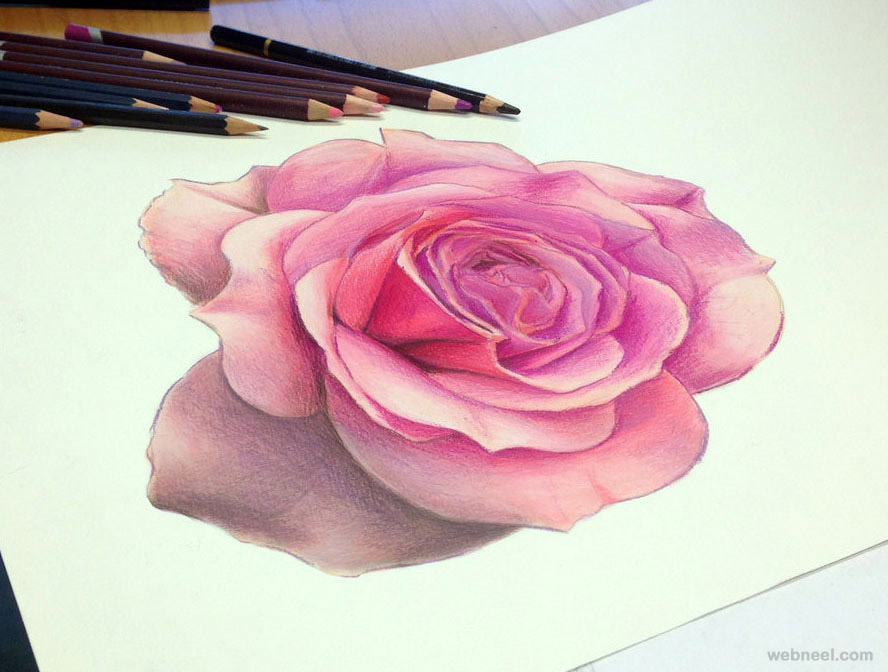 rose color pencil drawing atomiccircus