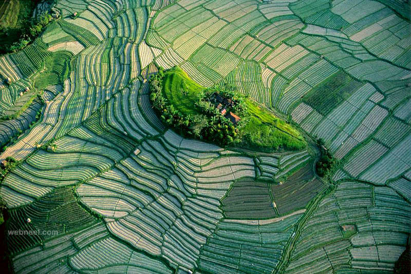 aerial view photography rice fields