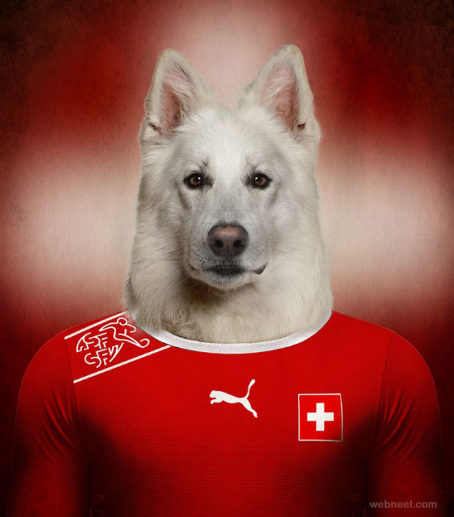 soccer nations dogs funny