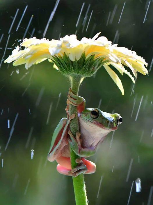 frog widlife photography