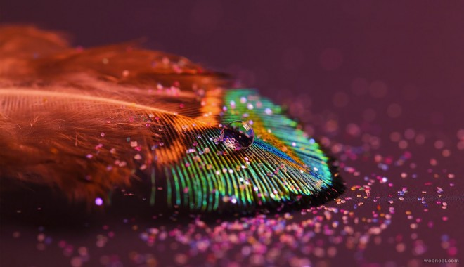 feather abstract photography
