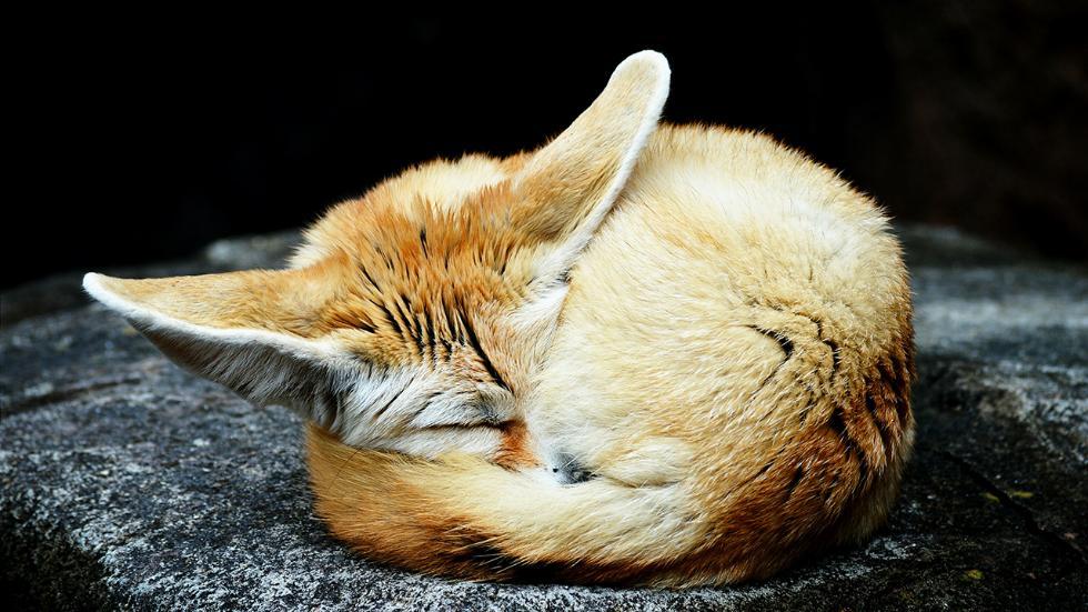 6-fox-nature-photography-by-kristofferdiekema