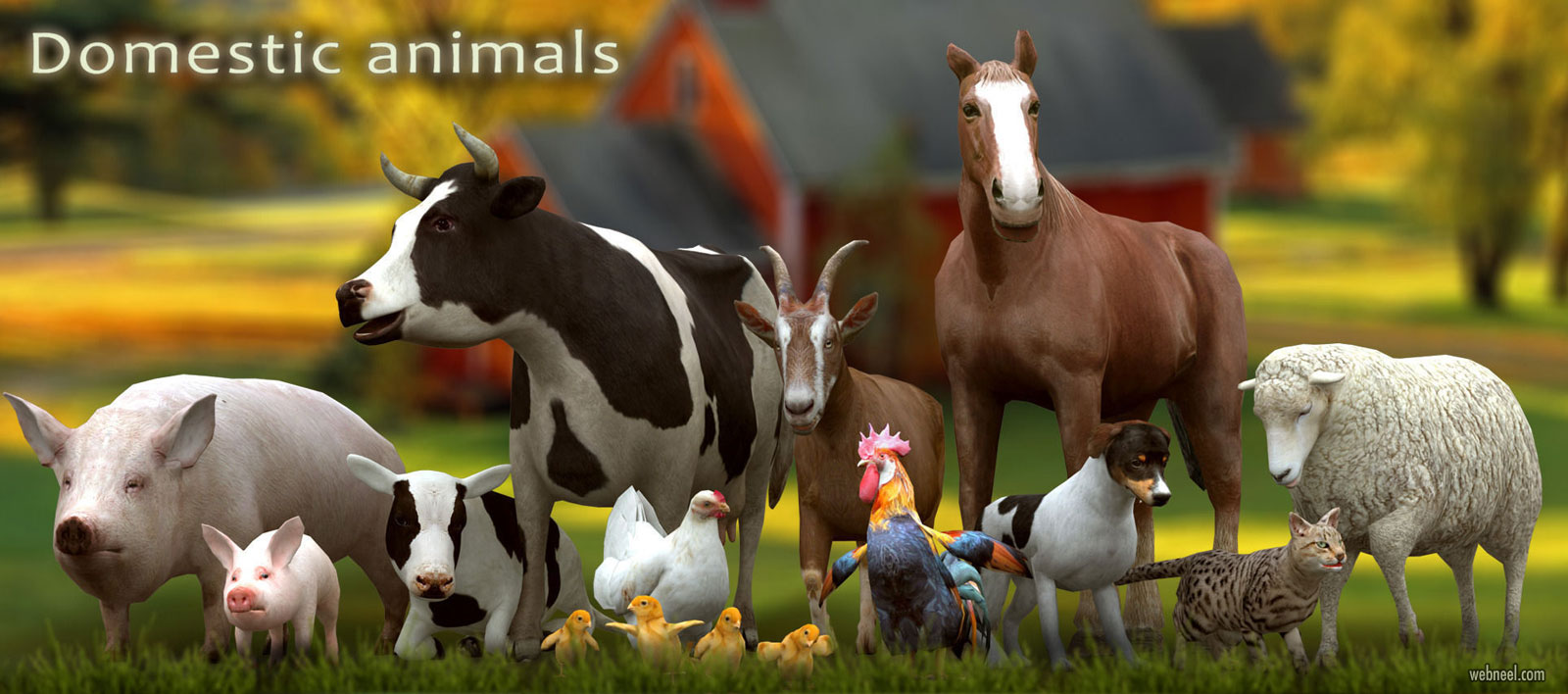 3d models domestic animals by 3drtcom
