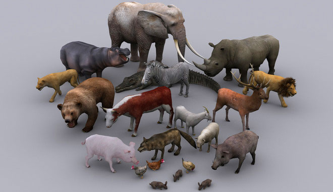 3d animal models character design by protofactor