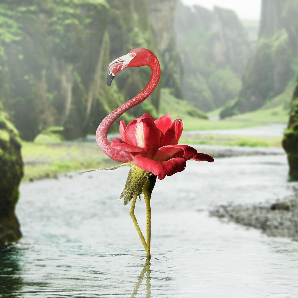 photo manipulation flamingo by phuoc nguyen