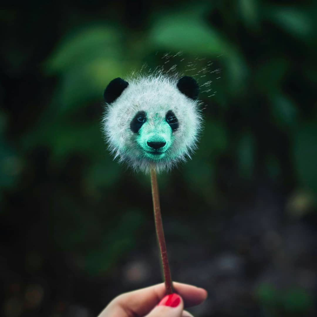 photo manipulation panda by phuoc nguyen