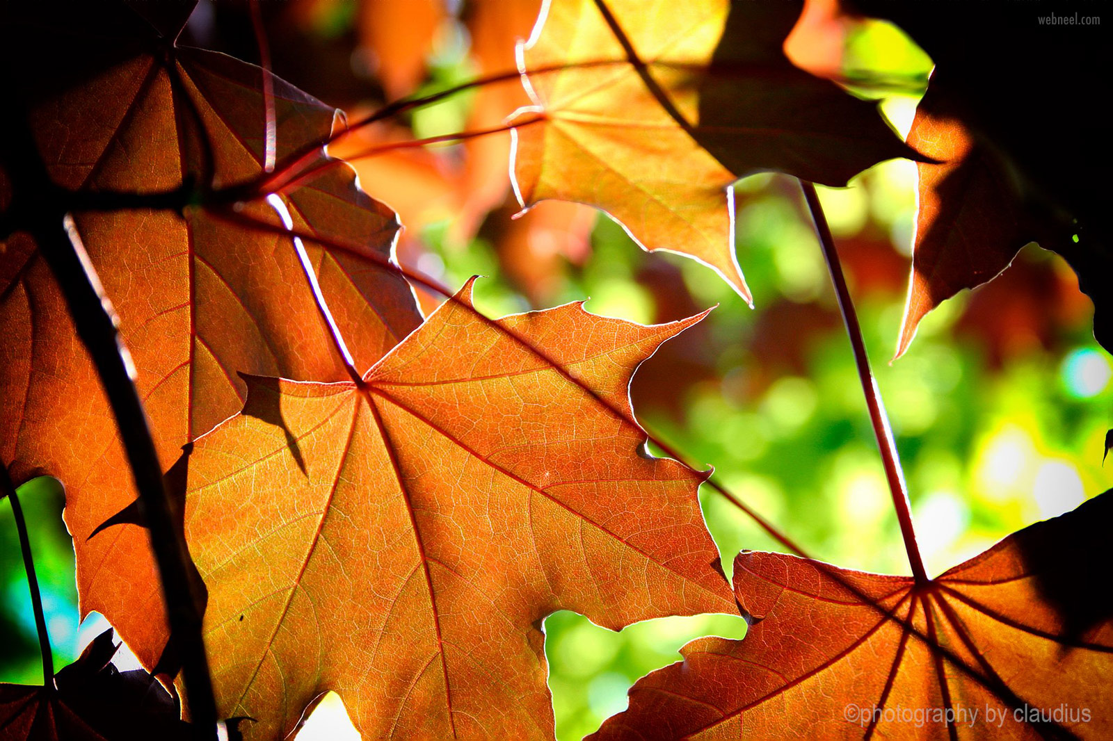 beauitiful leafs photography by claudius