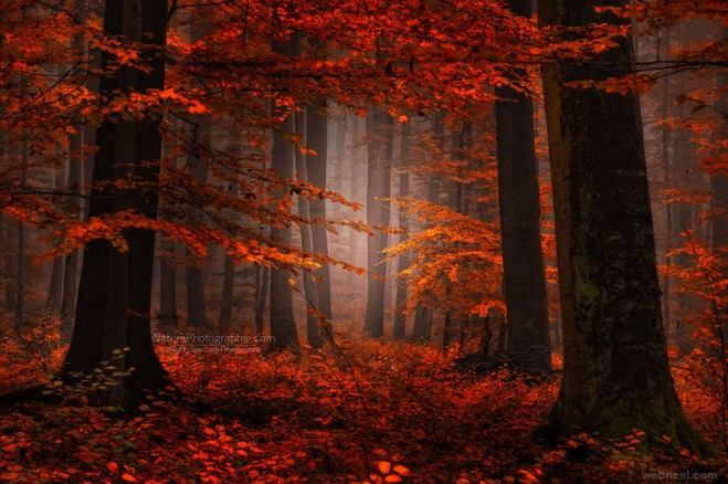 nature photography forest by philippe sainte