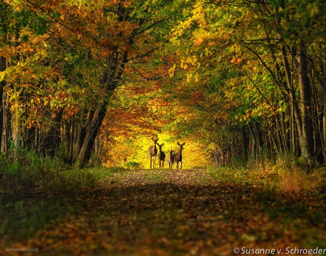 nature picture forest