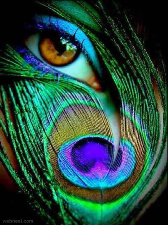 creative photography eye peacock