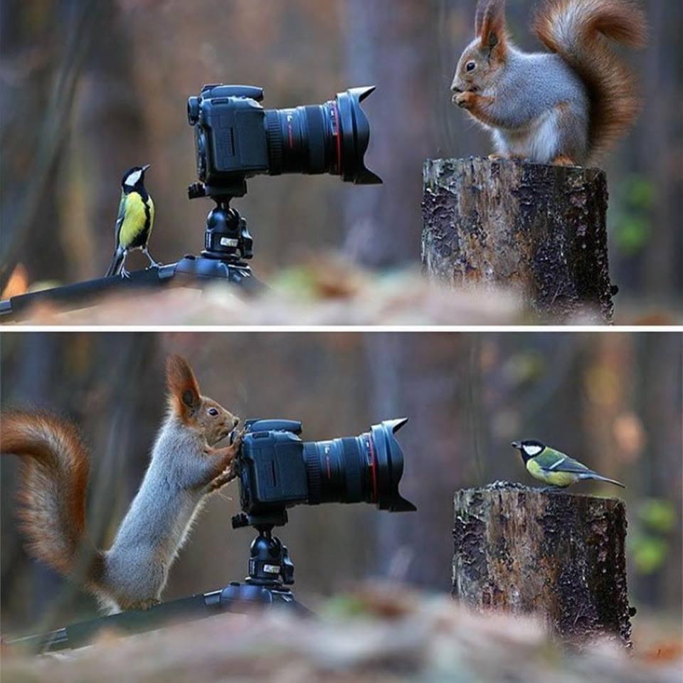 wildlife photography idea by vadimtrunov