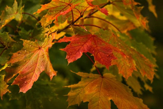 fall leaves nature photography by paul graham