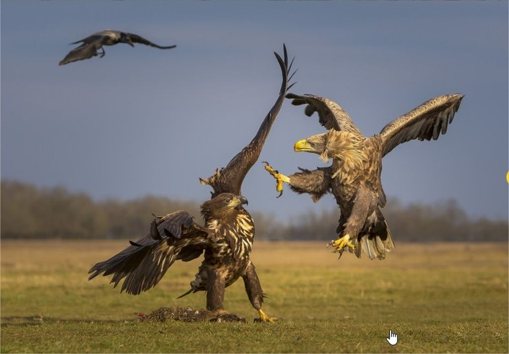 3-hamdan-international-photography-award-by-mohammad-khorshid