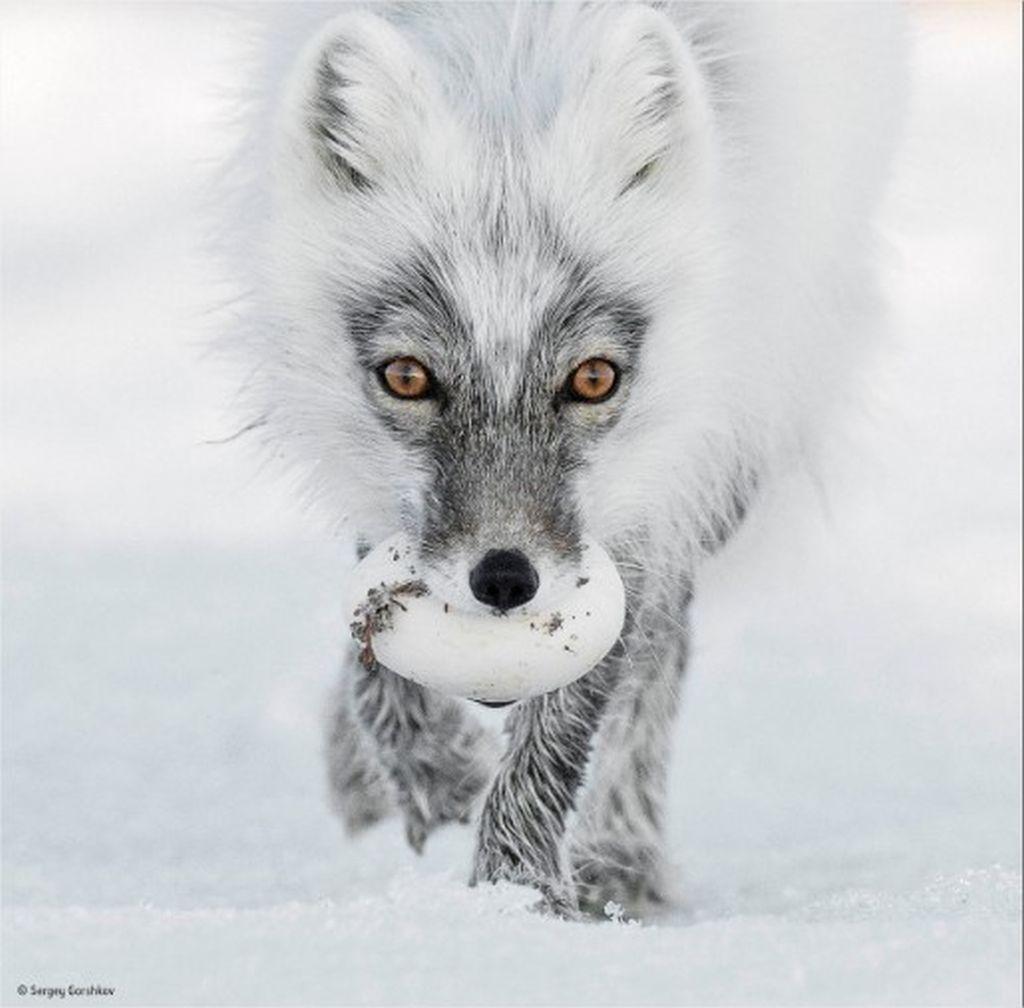 6-wildlife-photographer-award-by-sergey