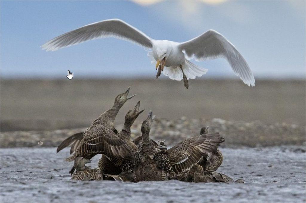 7-hamdan-international-photography-award-by-matteo