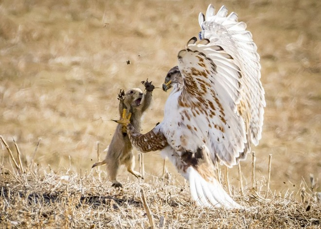 8-national-geographic-nature-photographer-by-david