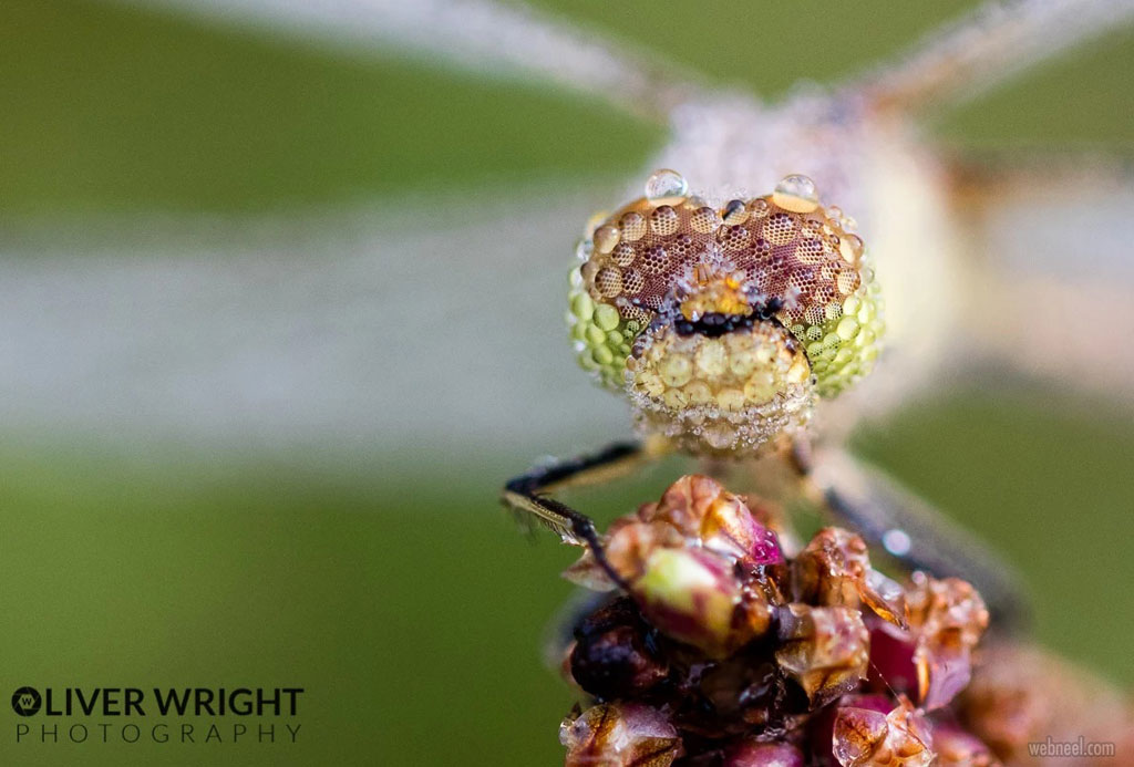 beautiful macro photography by oliver wright