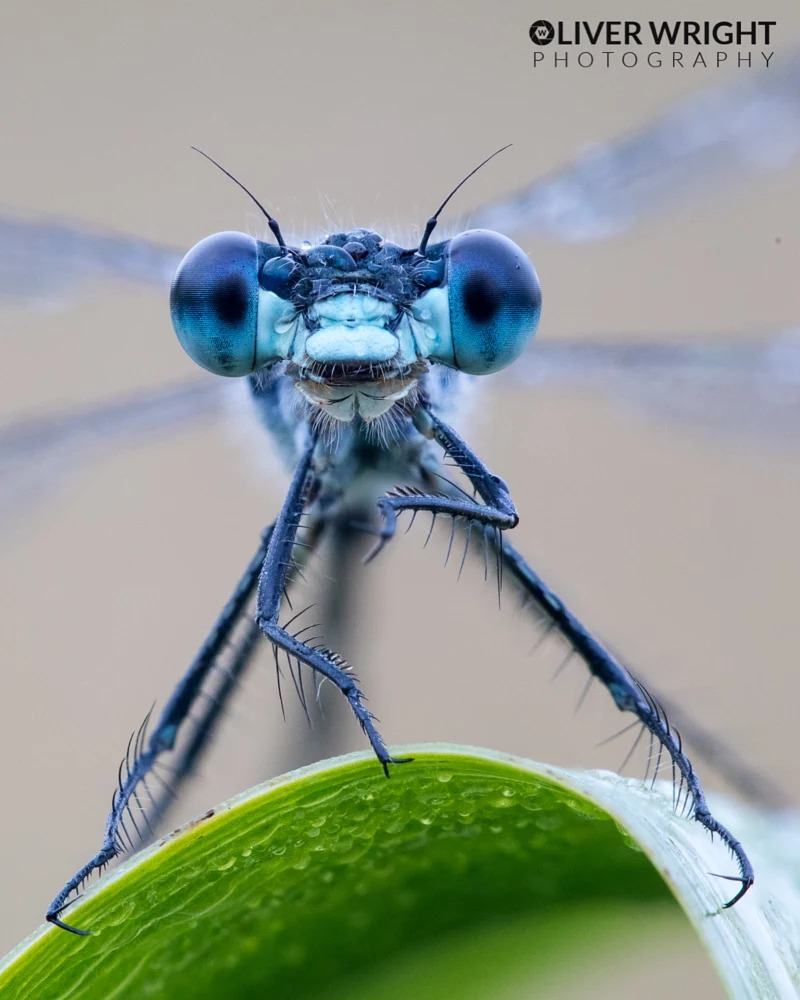 macro photo by oliver wright