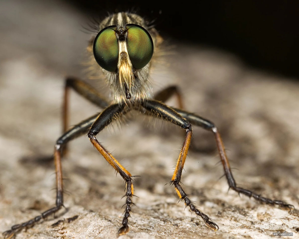 macro photography by oliver wright