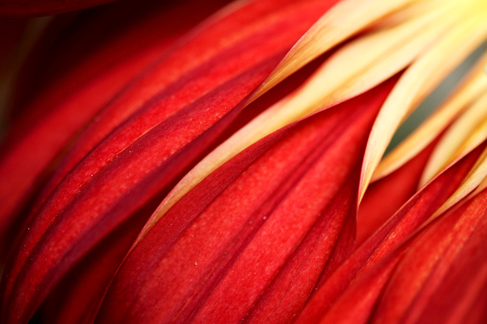 macro photography flower by hanley will