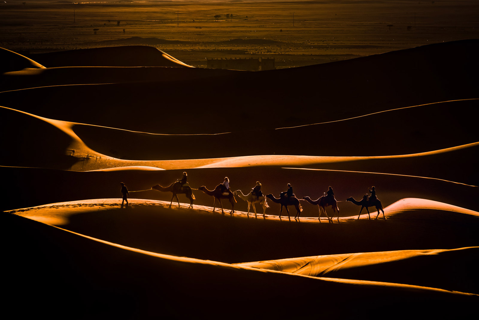 sunset photography camel by massimo mengoli