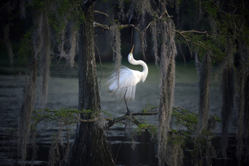 wildlife photography swan by mike lempert