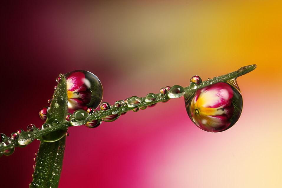 macro photography (5)