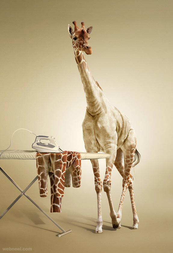 photo manipulation giraffee