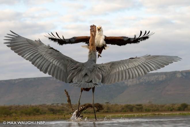 flight windland awards photography by max waugh