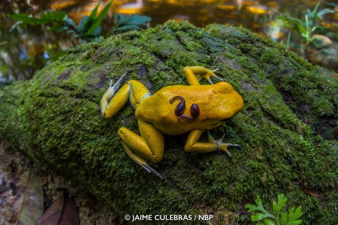 frog windland awards photography by jaime culebras