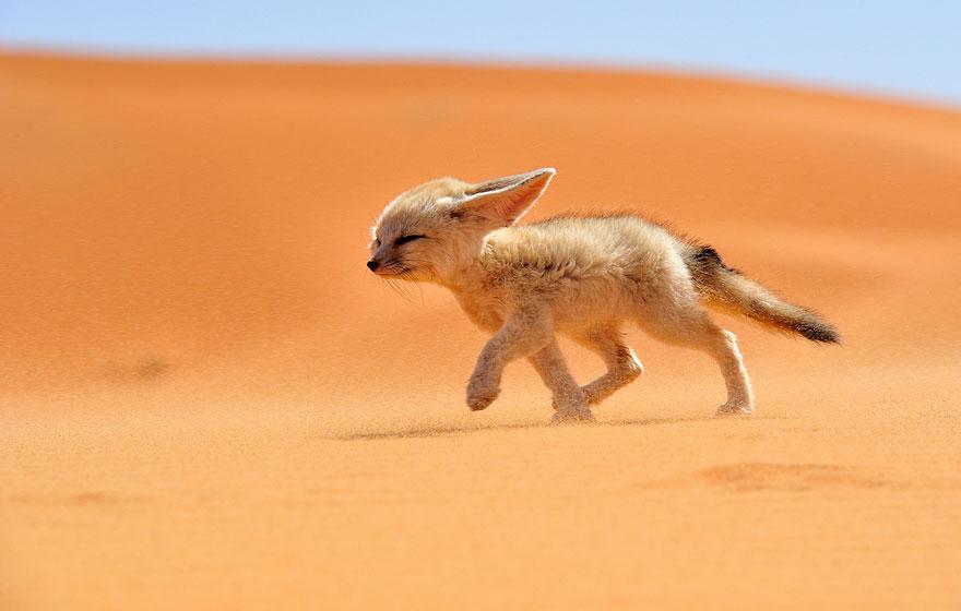 4-stroll-wildlife-photography-by-francisco-mingorance