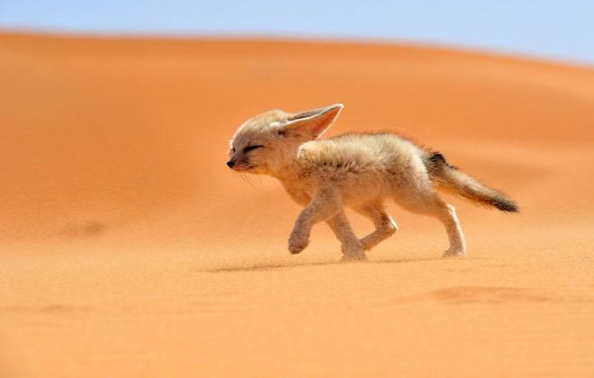 stroll wildlife photography by francisco mingorance