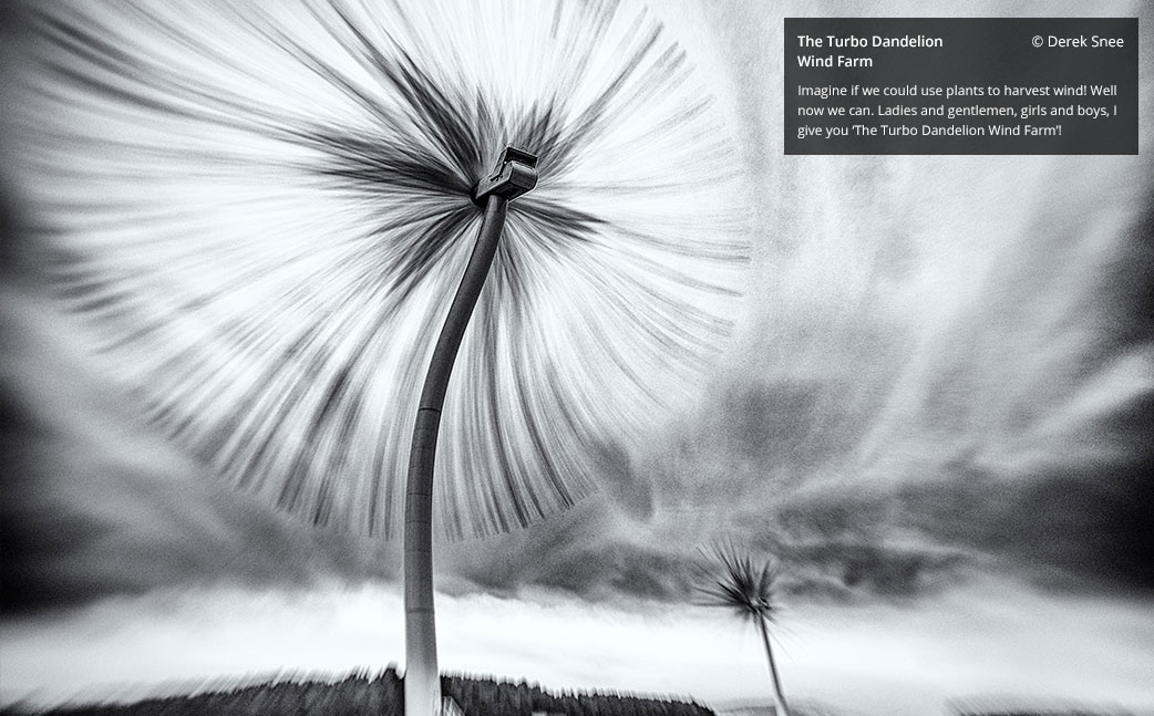4-turbo-dandelion-photography-by-derek-snee