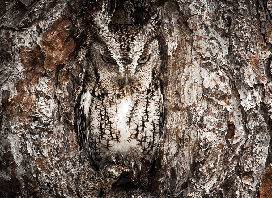 5-owl-wildlife-photography-by-graham-mcgeorge