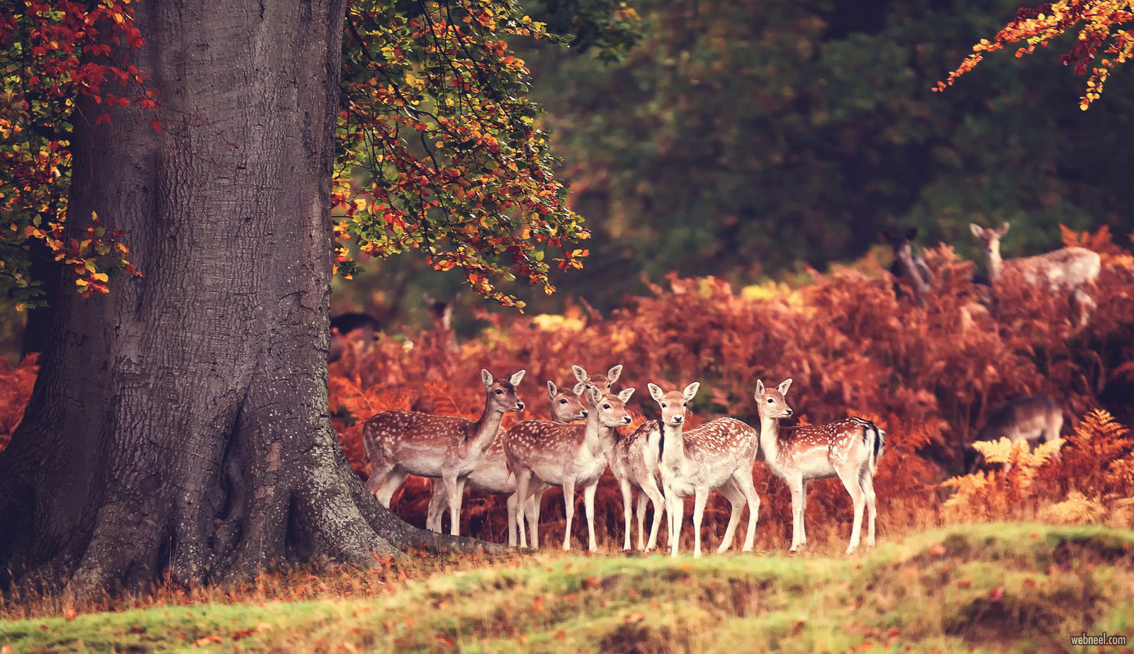 wildlife photography deer by mark bridger