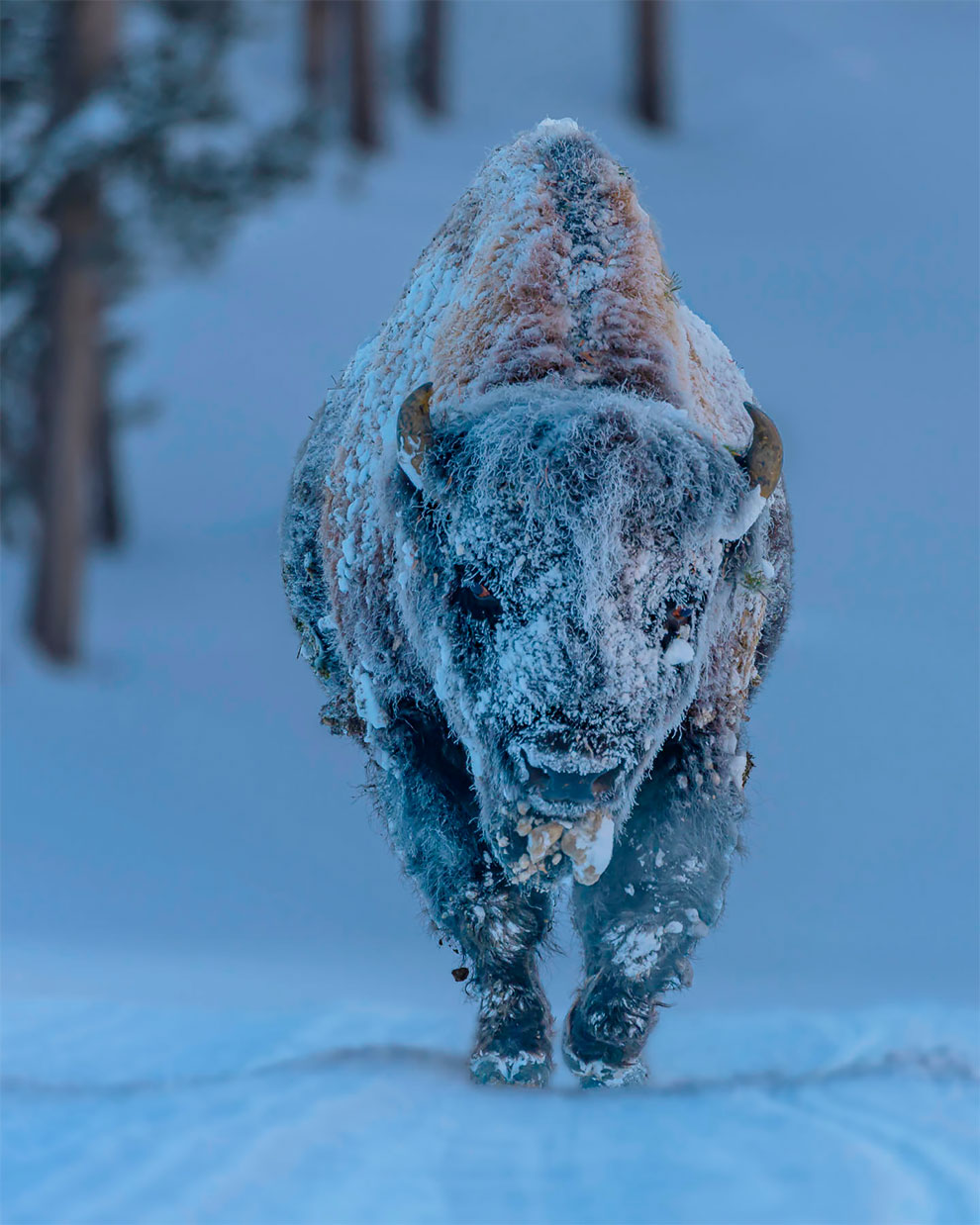 weather photography forsty bison