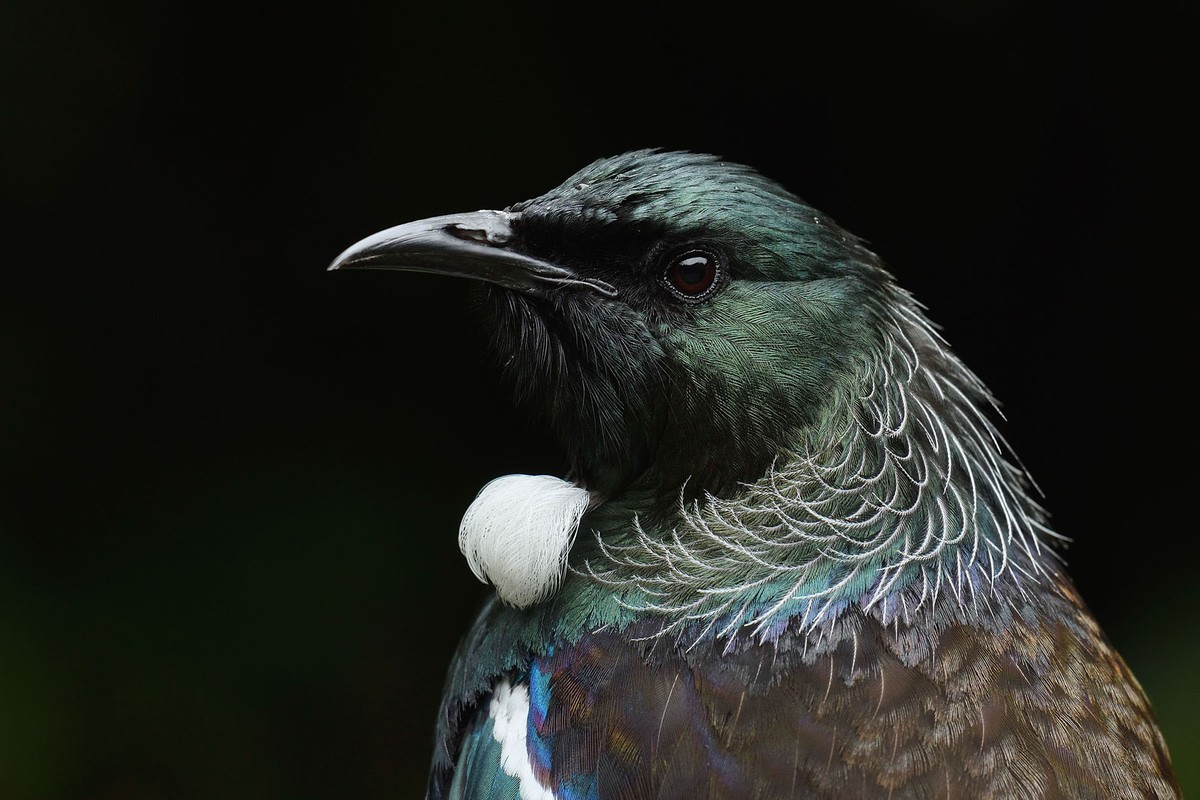 best wildlife photography award winner a tui