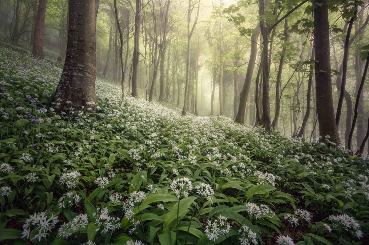 landscape photography award winning photo magical woodland by chris frost