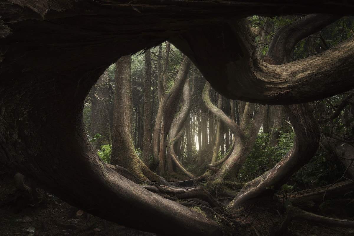 landscape photography awards twisted forest by adam gibbs